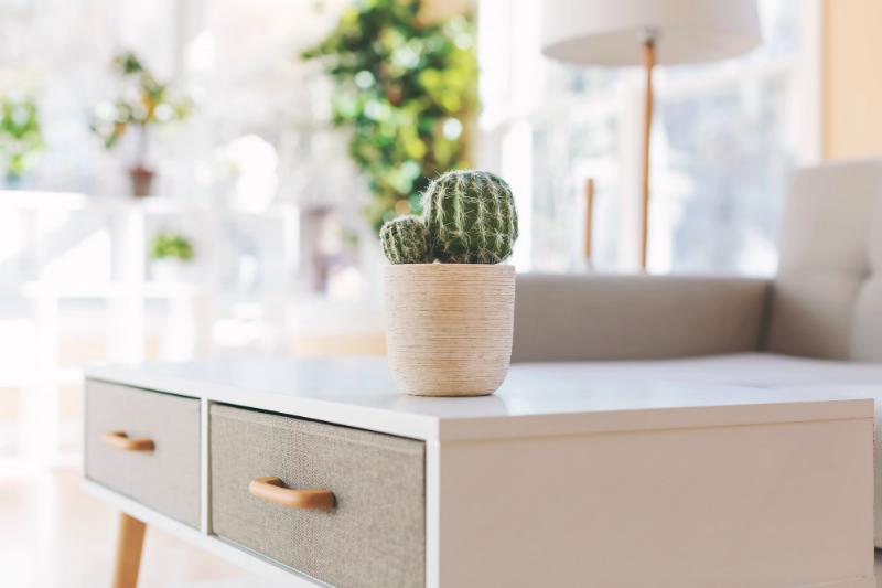 warum kakteen und rosenquarz nicht gegen elektrosmog. Black Bedroom Furniture Sets. Home Design Ideas