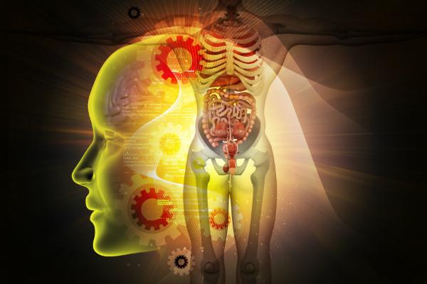 Hirn, Herz und Fortpflanzungsorgane sollten besonders gegen Elektrosmog geschuetzt werden