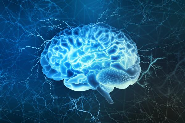 Illustration des menschlichen Gehirns