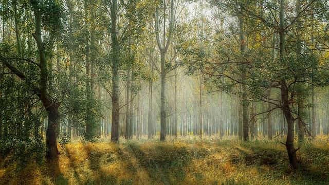 Bäume emfindlich auf Mikrowellenstrahlung