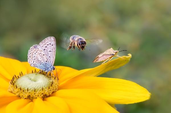 insekten-artenvielfalt-5g-und-das-insektensterben