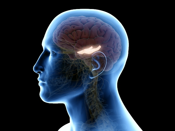 Hippocampus-handy-schaedlich-gedaechtnisleistung