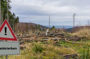 Waldsterben - Baumschäden durch Mobilfunk