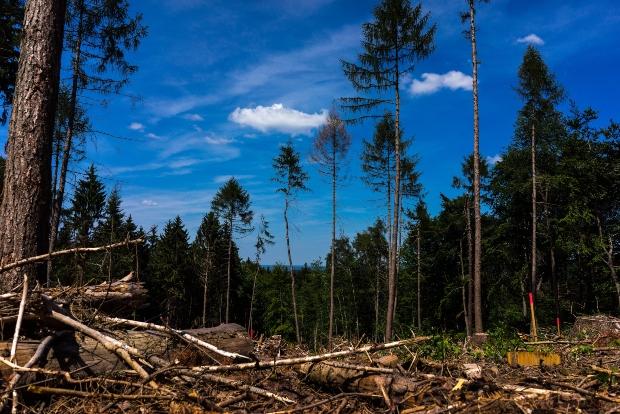Waldsterben - Baumschäden können durch Mobilfunk verursacht werden