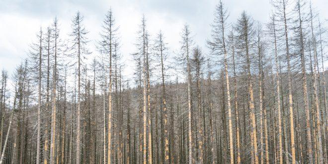 Waldsterben - Gesundheitsrisiken und Umweltschäden durch 5G-Strahlung